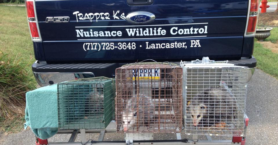 Trapper K's Nuisance Wildlife Control, LLC